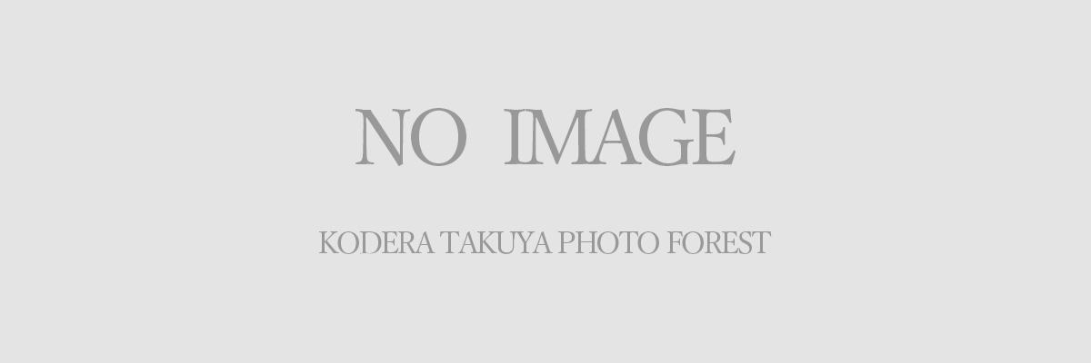no_image